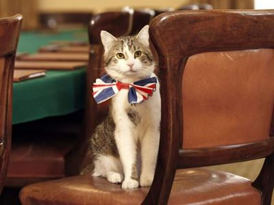 แมว Larry