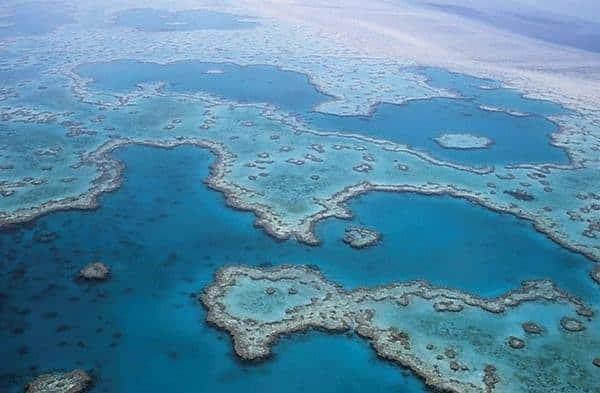แนวปะการังที่ใหญ่ที่สุดในโลก